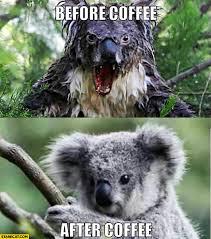 Angry Koala Meme - before coffee angry koala after coffee cute koala starecat com