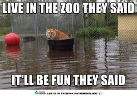 meme weavers on twitter life of pi on a budget zoo tiger