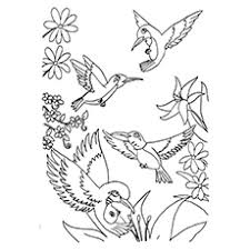 bird coloring pages for toddlers top 10 hummingbird coloring pages for your toddler