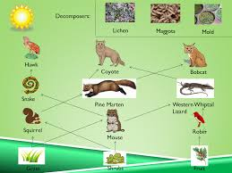 Tropical Dry Forest Animals And Plants - tropical dry forest
