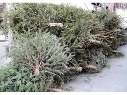 when is curbside christmas tree collection in nashua nashua nh