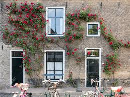 gouda netherlands june 10 2015 house wall with front doors