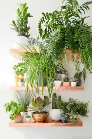 anthro inspired diy copper shelves cheap plants copper and plants