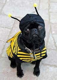 pug halloween costume for baby easy pet halloween costumes diy network blog made remade diy