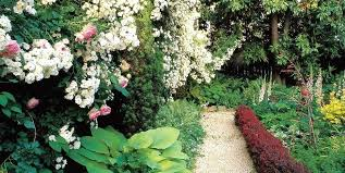 courtyard garden design ideas pictures exhort me small front garden design ideas photos small backyard white roses