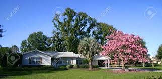 ranch style front of a white ranch style house with a pink tabebuia tree