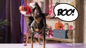 halloween headless horseman costume how to create a headless horseman costume for your dog youtube