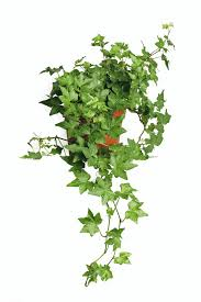 top 10 easy to grow plants with great health benefits top inspired