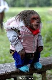 Funny Monkey Memes - wonderful monkey memes funny monkey pictures memey 2 monkey memes