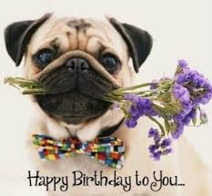 Birthday Pug Meme - neesy monday 4 9 is your birthday the stephenking com