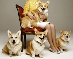 The Queens Corgis The Queen U0027s Favourite Dog A Z Dogs