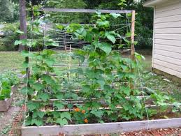 1341 best vegetable gardening images on pinterest veggie gardens