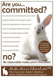 bunnies for easter not a happy easter bunny stop animals abuse rescue animals