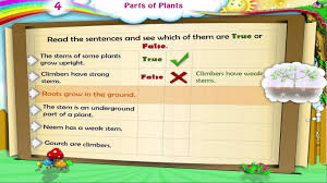 learn grade 3 science parts of plants youtube