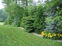 Privacy Backyard Ideas by Privacy Planting Outdoor Ideas Pinterest Privacy Plants