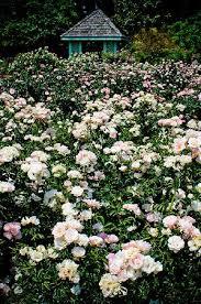 leu gardens 1 picture of harry p leu gardens orlando tripadvisor
