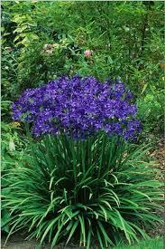 Summer Flower Garden Ideas - 17 best flower beds images on pinterest gardening landscaping