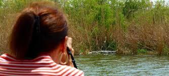 Alabama wildlife tours images Delta wildlife boat eco tour wildnative tours jpg