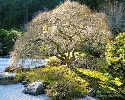60 best japanese gardening images on pinterest landscaping ideas