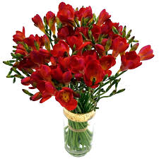 freesia flower freesia fresh flowers freesia flowers with next
