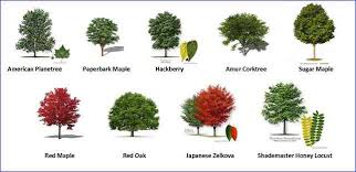 pictures of different types of real trees home design
