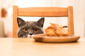 will those thanksgiving left overs poison your cat front page meews