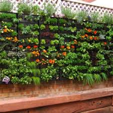 lovely simple vegetable garden ideas and pretty simple vegetable