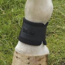 what are wraps pastern wraps