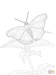 red admiral butterfly coloring page free printable coloring pages