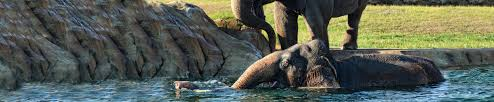 audubon zoo new orleans audubon nature institute