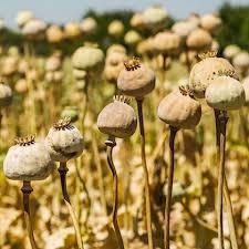 Dead Flowers Tabs - dead flowers song mango