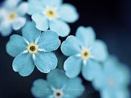 Images Flowers Flowers Bouquet Images Qygjxz