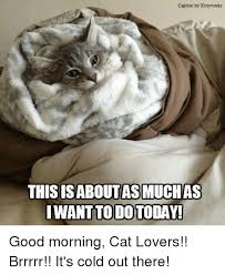 Good Morning Cat Meme - caption by kittyyworks this isaboutasmuchas want to dotoday good