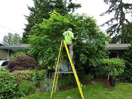 jd tree service tree pruning tree trimming serving seattle