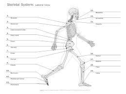 skeletal system diagram types of skeletal system diagrams