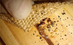 How To Kill Bed Bugs At Home Where Do Bed Bugs Come From How Do You Get Bed Bugs In Your House