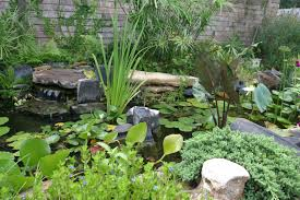 texas landscaping ideas landscaping backyard landscaping ideas el paso tx