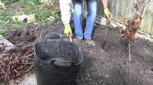 planting a native hedge how to plant a bare root hedge advice from best4hedging youtube