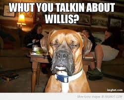 boxer dog funny boxer dog meme funnypictures in