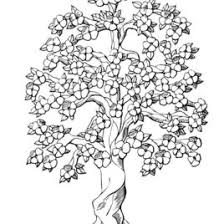 coloring pages coloring book owl tree coloring