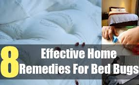 Bed Bug Home Remedies 8 Effective Home Remedies For Bed Bugs Natural Treatments U0026 Cure