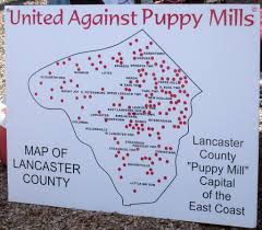 Amish Pennsylvania Map by Shut Down Amish Puppy Mills Puppy Mills This Is Where Your Pet