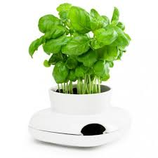 herbe cuisine pot à herbes aromatiques de cuisine sagaform