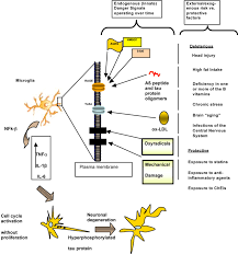 Anatomy And Physiology Of The Brain Frontiers Integrative Understanding Of Emergent Brain Properties