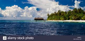 over water bungalows on a tropical island with palm trees and