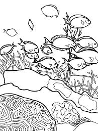 of coral reef fish colouring page colouring tube