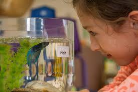 pets in the preschool classroom