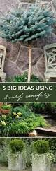 Small Yard Landscaping Ideas The 10 Best Trees For Small Yards Grass Free Lawn Pinterest