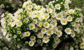 Wholesale Flowers San Diego San Diego Wholesale Flowers Florist U0026 Bouquets Aster Monte Casino