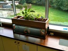 nice little desktop aquaponics system using a fish tank